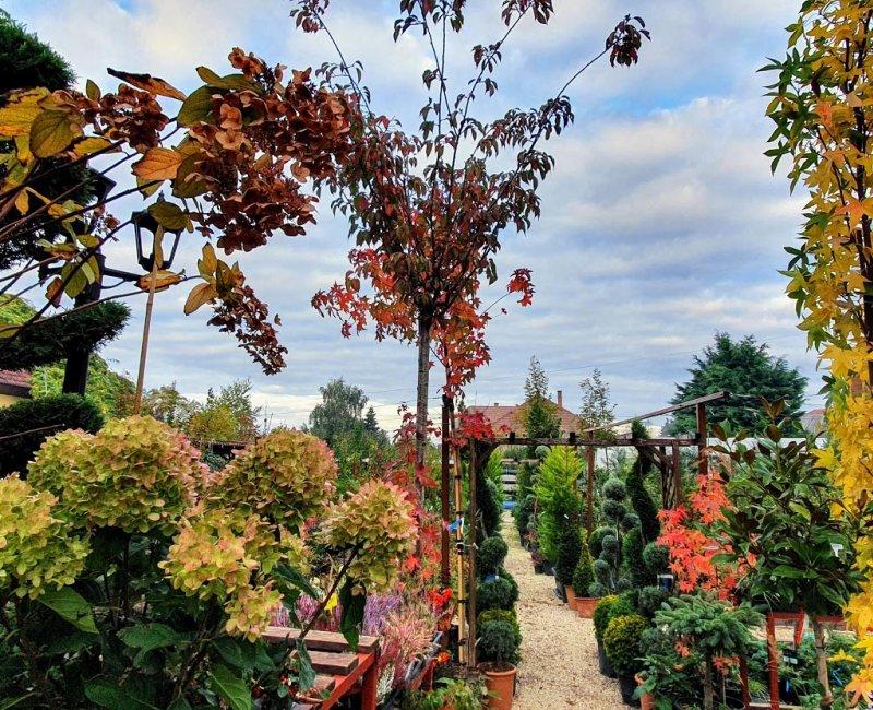 Virágliget kertészeti áruda
